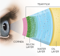Your Tear Film and How it Works